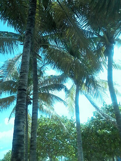 Perfect Palms by erinv2000