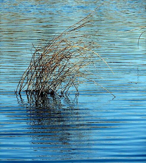 Whisp...Snake River. Buhl Idaho by trueblvr