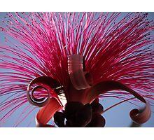 Springtide - Primavera Photographic Print