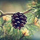 Pinecone waiting to drop by JannaN