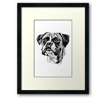 The playful Boxer dog. Framed Print