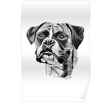 The playful Boxer dog. Poster