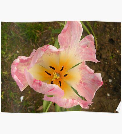 Flower Close-Up, Lower Manhattan, New York City Poster