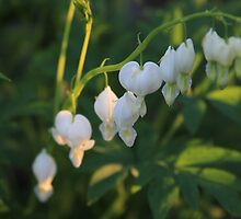 bleeding heart by jomaot