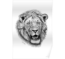 King of Africa Poster