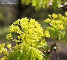 Tree flower by Mike-93
