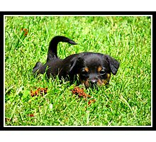 sweet lil pup! Photographic Print