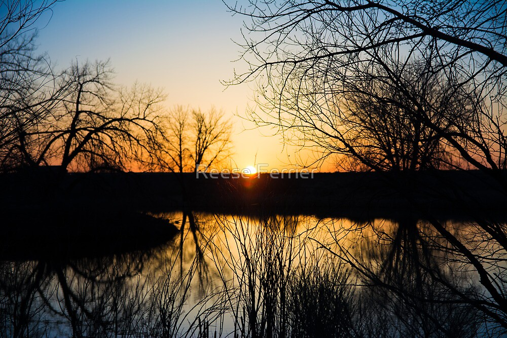 First Dawn of Spring by Reese Ferrier