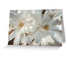 Big White Flowers Greeting Card