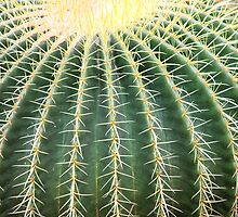 a single round cactus by Paula Bielnicka