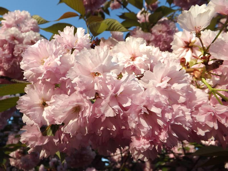 Jersey City, New Jersey, Flower Close-Up by lenspiro