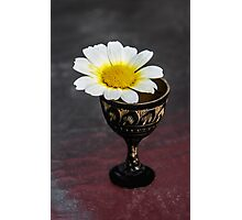 Daisy Still LIfe Photographic Print