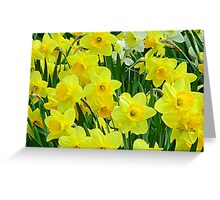 Daffodils.  Greeting Card
