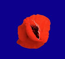 Poppy On Blue by Ron Marton