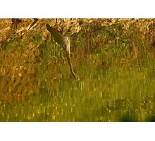 Abstract on the Pond Photographic Print