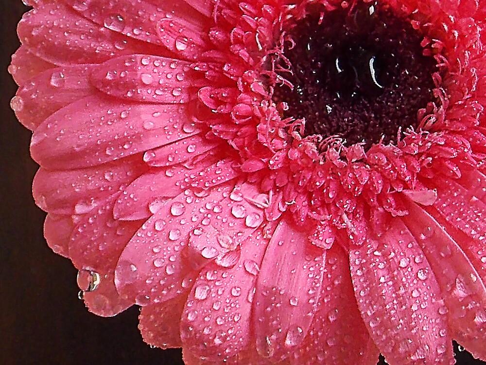 1017-pink gerber by elvira1