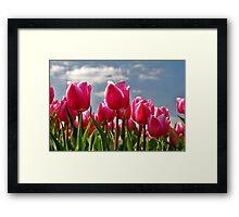Tulips, tulips, tulips...... Framed Print