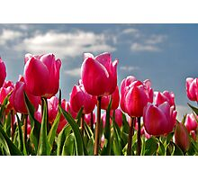 Tulips, tulips, tulips...... Photographic Print