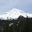 Mt. Rainier in Spring by skreklow