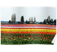 Beautiful Fields of Tulips 2 Poster