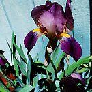 Iris by Tori Snow