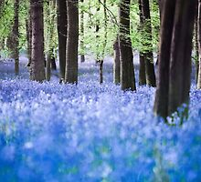 Bluebell 5 by redtree