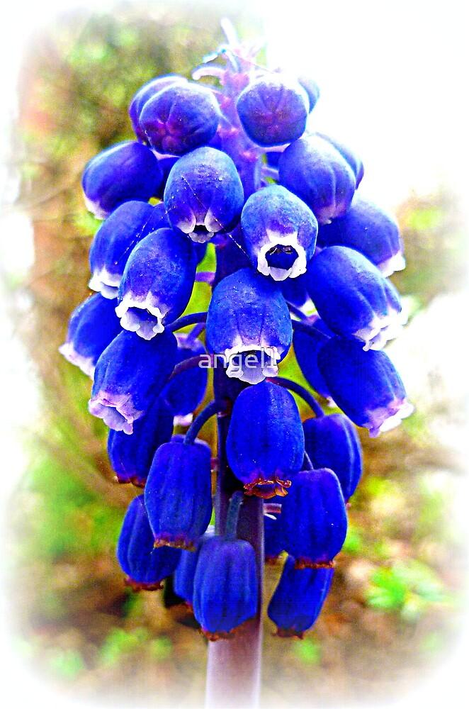 Muscari ~ Grape Hyacinth by ©The Creative  Minds