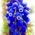 Muscari ~ Grape Hyacinth by The Creative Minds