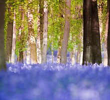 Bluebell 4 by redtree