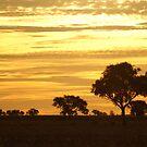 Sunset 1 by waynepearce
