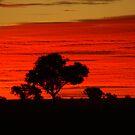 Sunset 3 by waynepearce