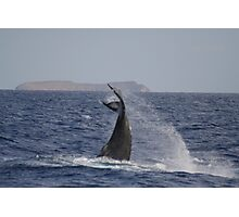 Female Whales Keeps Others Away Photographic Print