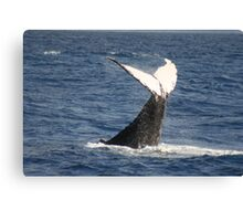 Competing Humpback Whale Canvas Print