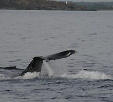 Whales in Hawaii by Katie Grove-Velasquez