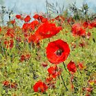Poppies - Val d'Orcia by RicIanH