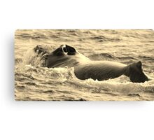 Male Humpback In Hawaii Canvas Print