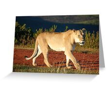 Gondwana Lioness Greeting Card