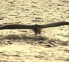 Humpback Tail by Katie Grove-Velasquez