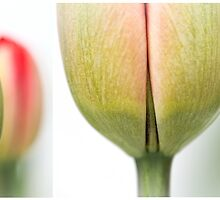 Fresh Tulips (Diptych....) by Bob Daalder