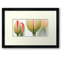 Fresh Tulips (Diptych....) Framed Print