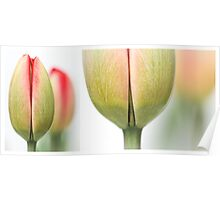 Fresh Tulips (Diptych....) Poster