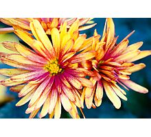 red yellow flower Photographic Print
