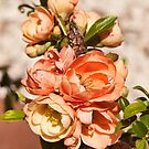 Flowering quince by Penny Rinker
