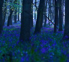 Bluebell Woods by redtree