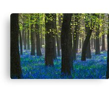 BlueBells III Canvas Print