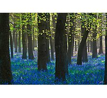 BlueBells III Photographic Print