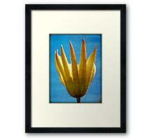 Wild Flower Blooming Framed Print