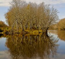 Trees in Late Fall by biffmitchell