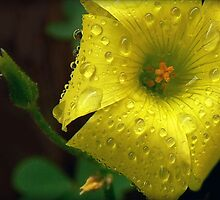 "Said Oxalis the Edible--""I'm Not Afraid of Rain..."" by paintingsheep"