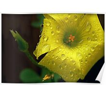 "Said Oxalis the Edible--""I'm Not Afraid of Rain..."" Poster"